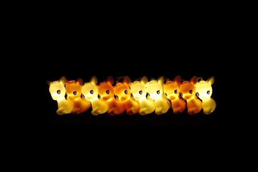 Nachtlicht-springhert
